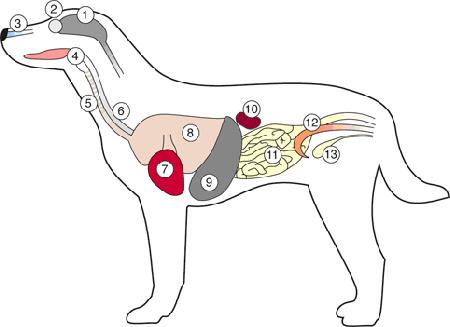 hoeveel botten heeft een hond